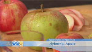 Apple Varieties and Apple Recipes