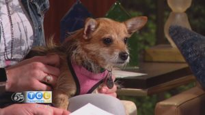 Pet of the Month: Chloe