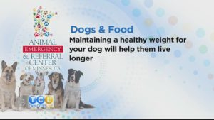Dogs and Food