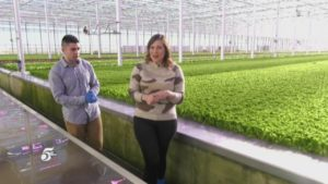 Superior Fresh: Growing Greens in the Middle of Winter
