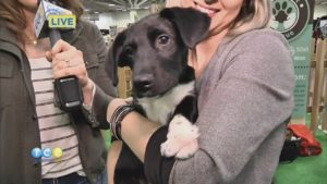 Barking Lot at Minneapolis Home and Garden Show