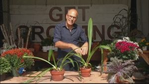 Larry Pfarr Answers Your Gardening Questions